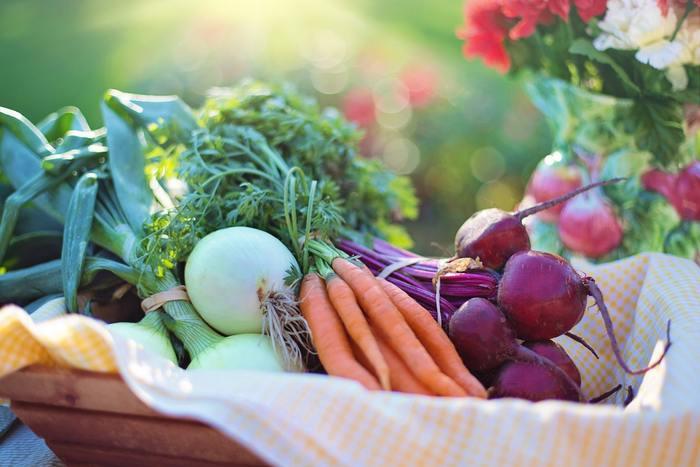 トマトやきゅうり、ナスやピーマン。夏野菜の収穫が一通り終わり畑が寂しくなっていませんか?暑さが和らいで涼しくなってきたら、冬野菜の種をまいたり苗を植えるタイミングです。夏野菜で養分が減ってきているので、必要な肥料を足しながら土作りを始めましょう。