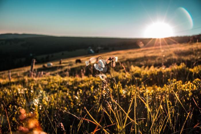まだ日中の暖かさが残る9月は、水菜やレタス類・小松菜や春菊など鍋にも大活躍の葉物の種をまいておきましょう。遅くても12月には収穫できますよ。10月には大根やカブなどの根菜も種まきしていきます。その他にも白菜やほうれん草、豆類も準備したいですね。冬野菜にもワクワクするようなおいしい野菜がたくさんありますよ。
