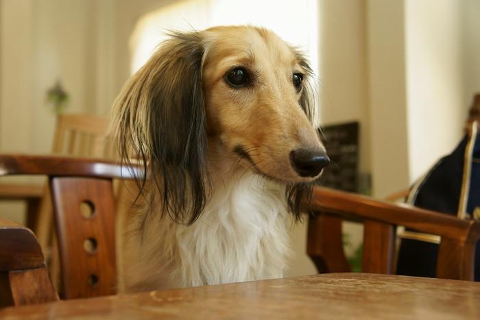 雨の日でも安心♪店内でゆっくり食べられるドッグカフェをご紹介しました。犬種によっては店内不可となる場合があるかも知れませんので気になる方は事前に問い合わせてみてくださいね。
