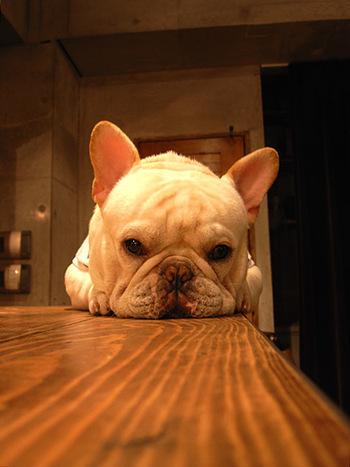 そしてこの可愛い看板犬がたまらない!2匹の看板犬がいるそうですが2匹揃っていることはあまりないそうです。でも、自由に店内をウロウロしている様子はワンちゃんを飼っている人はもちろんのこと、事情があって飼えない人の心も癒してくれます。