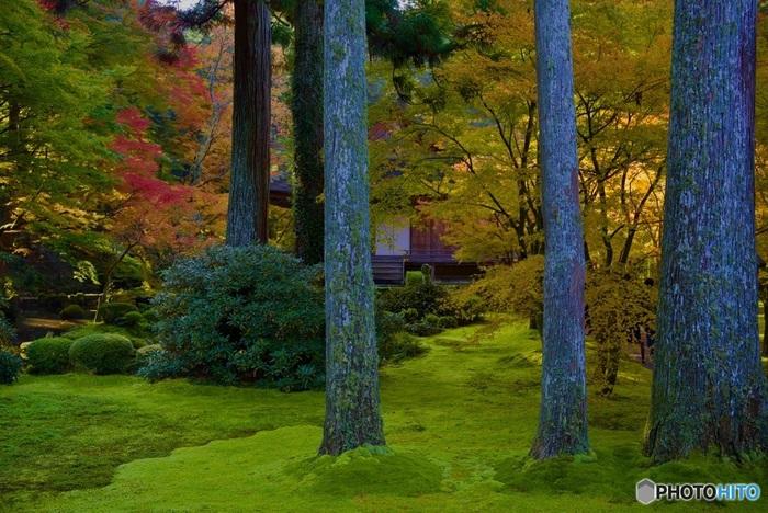 京都の中心部からは少し離れたところにある三千院。苔の美しい2つの庭園が有名で、紅葉の頃には、苔のグリーンと色づいた紅葉のグラデーションが美しく、その静けさも相まって思わず時間を忘れさせてくれる空間です。