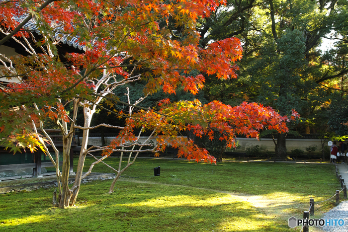 丸山公園や知恩院の近くにある青蓮院門跡は、代々皇族が住職を務めたとても格式高い寺院です。隣にある知恩院などに比べるとこぢんまりとしていますが、紅葉の美しさは京都随一といわれる庭園が広がります。