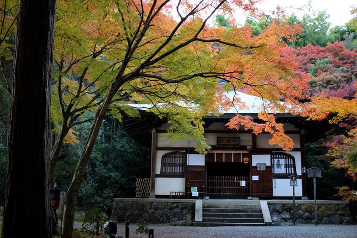最後にご紹介するのは、一休さんが修行したと言われている地蔵院。竹の寺と呼ばれ、ひっそりとした幻想的な雰囲気が魅力のお寺です。有名なお寺はもう何度も行ったから…という方に是非一度訪れて頂きたいスポットです。