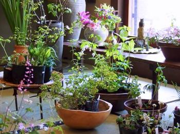 日本家屋にしっくりとなじむ和の草花は、「今ある」季節の草花ばかり。洋花はほとんど見当たりません。高級な生け花とも盆栽とも違った素朴な躍動感。草花の生命力を感じます。