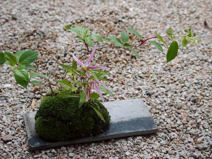 陶板の上に草木を寄せ植え、苔を施した美しい作品。じっと見つめていると、その静謐さに包まれてしまいそう。