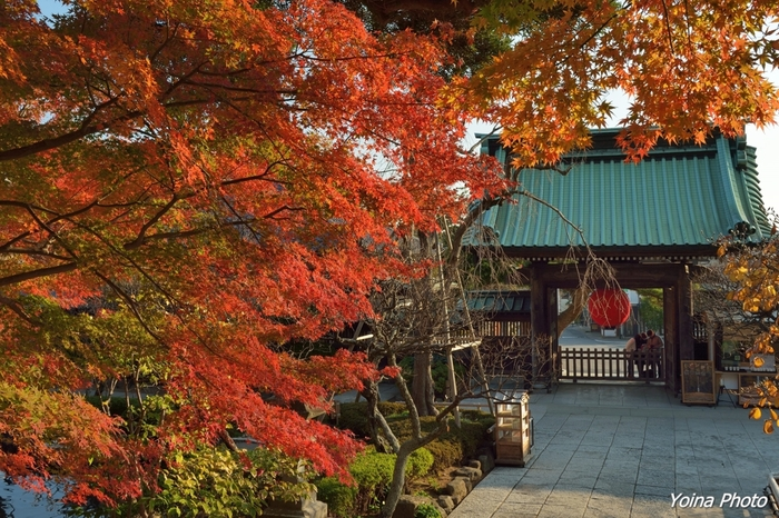 そして紅葉。紅葉のシーズンはライトアップもされて、通常より少し遅くまで長谷寺を楽しめることができます。