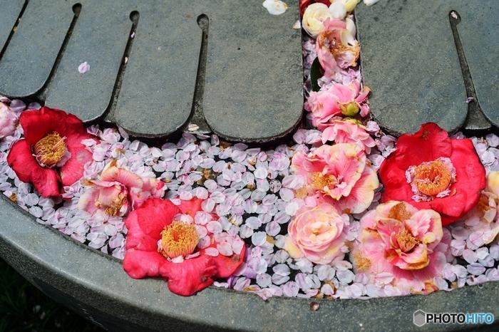 長谷寺の境内には、大仏の足形があったり、四季折々の花々を楽しむことができます。相模湾を見下ろしながら、お茶やお食事を頂くこともできるんですよ。今回は、のんびりゆっくり楽しめる、deepな長谷寺をご紹介したいと思います!