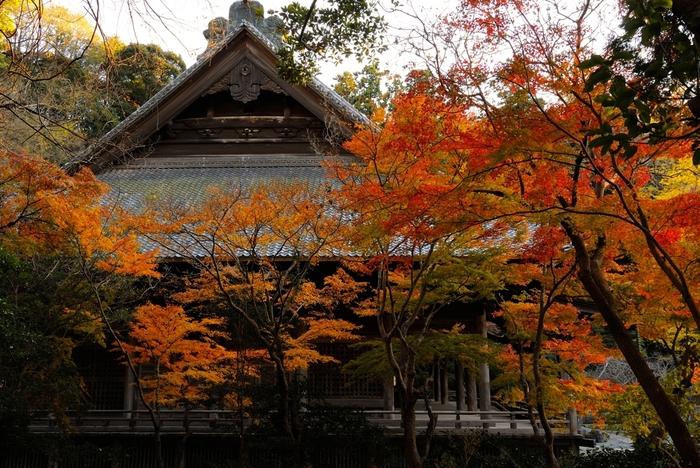 歴史ある建物と紅葉、木々の隙間から垣間見えるお堂。自然が織りなす造形美ですね。
