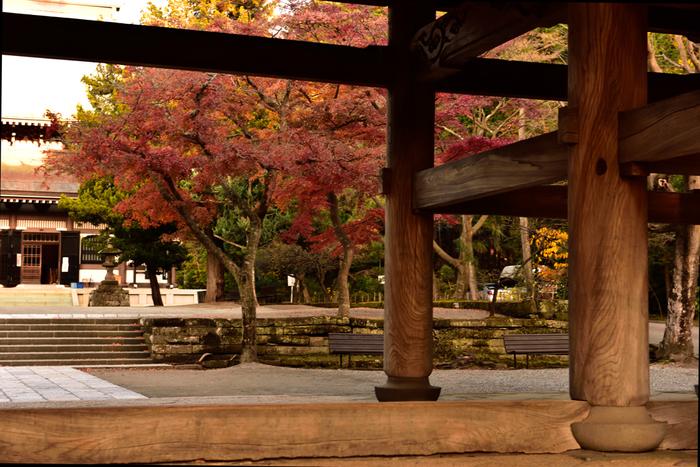 夏目漱石「門」の舞台としても知られる欅の木目が美しい「三門」から見る紅葉。