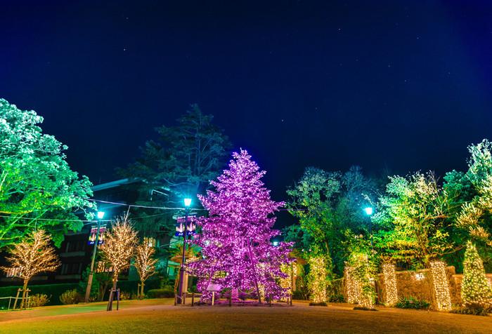 アメリカ山公園は、みなとみらい線の「元町・中華街駅」の駅舎屋上にある都市公園です。毎年クリスマスのシーズンになると、約7メートルのモミの木に、壮麗な電飾が施され、公園内は幻想的な雰囲気に包まれます。