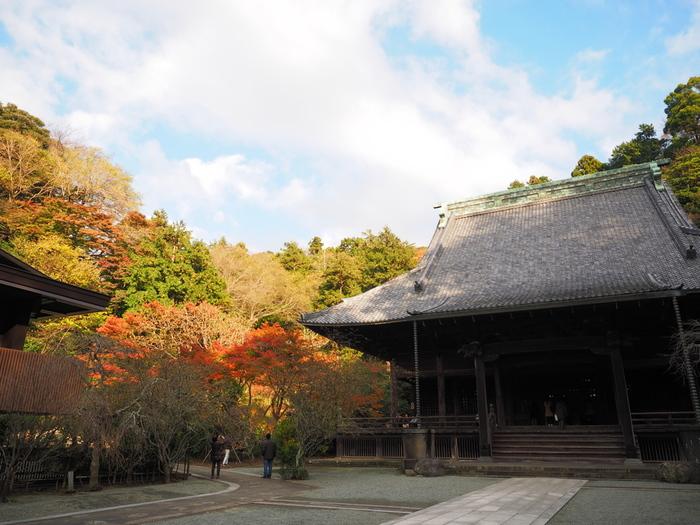 鎌倉といえば神社や寺院が多く、日本の歴史や文化に触れながら自然を楽しめるスポットとして一年中人気の観光地ですが、秋は紅葉も美しくさらに人気も高まります。
