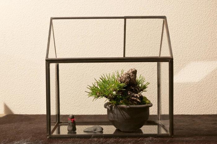 がっしりとした盆栽は風格があり、置く場所を選ぶのに迷いそう。でも、このように家型のガラスケースの中に、世界観を感じる小物たちと一緒に上手に配置したら、違和感ゼロ。可愛らしいデザインのガラスケースが、洋風の室内と和盆栽をうまく繋いでくれそう。