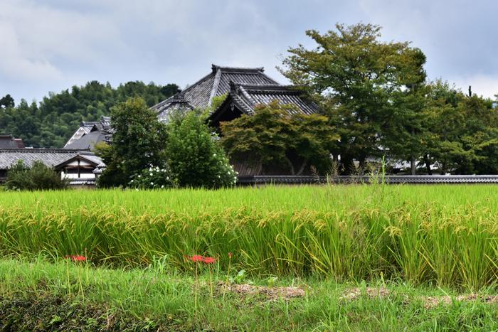 日本最古の仏教寺院「飛鳥寺(あすかでら)」。596年(推古4年)、蘇我馬子によって建立されました。 大化の改新を共に行った中大兄皇子(後の天智天皇)と中臣鎌足は、この飛鳥寺で出会ったと言われています。