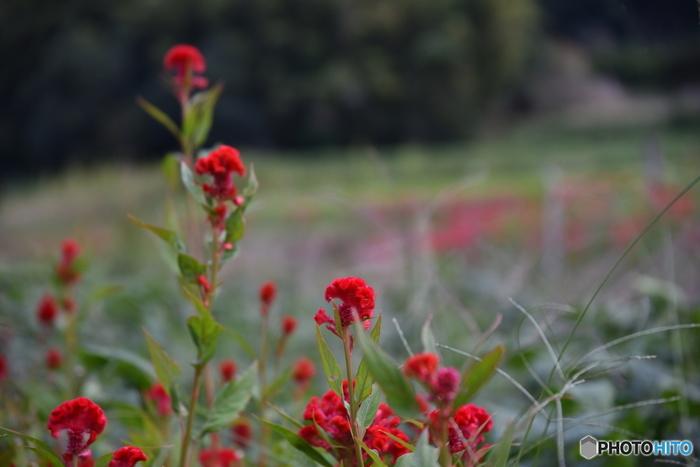 道行くだけで、野に咲く花々に心癒される明日香村。そんな明日香村に残る、古墳や寺院、石造物などの見所をご紹介します。