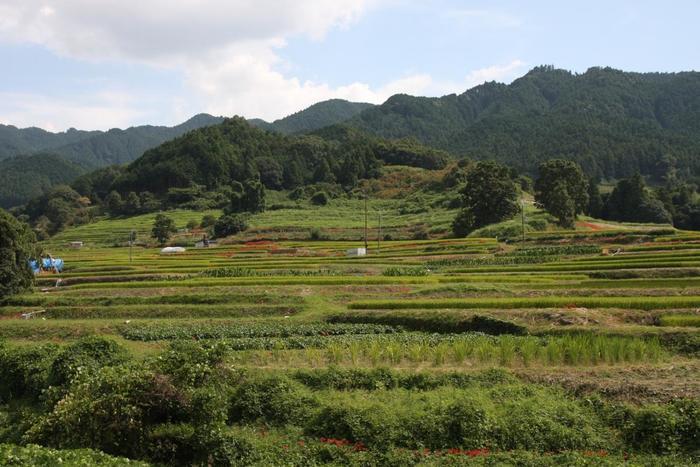 奈良市の平城京に都が移る以前、都が置かれていたのが、奈良県の中部にある高市郡・明日香村です。奈良時代より前の、飛鳥時代に作られた古墳などの史跡や歴史的な寺院が残っています。