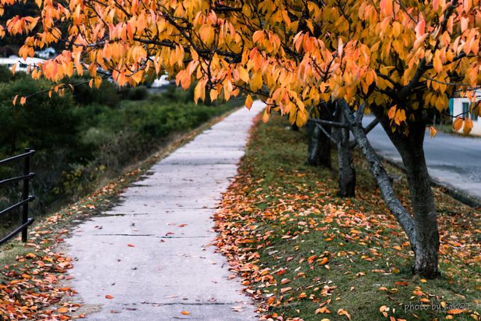 忙しい毎日の中では、気が付いたらあっという間に季節が流れていたなんていうこともありますよね。お散歩では空気を肌で感じて、お花や木々の変化をゆっくりと眺めながら、五感を刺激しましょう。