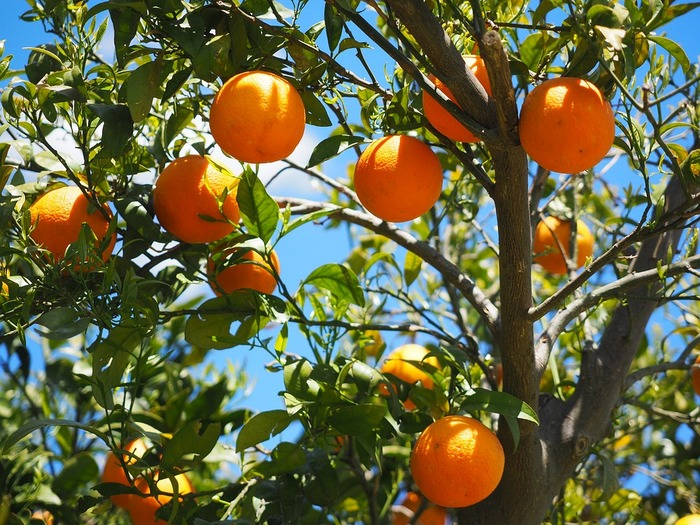 湯船に浸かると、爽やかな柑橘系の香りがいっぱいに広がります。お風呂タイムでリフレッシュできそうですね。 秋~冬にかけて手に入りやすいので、リフレッシュしたい人の強い味方になりますよ!