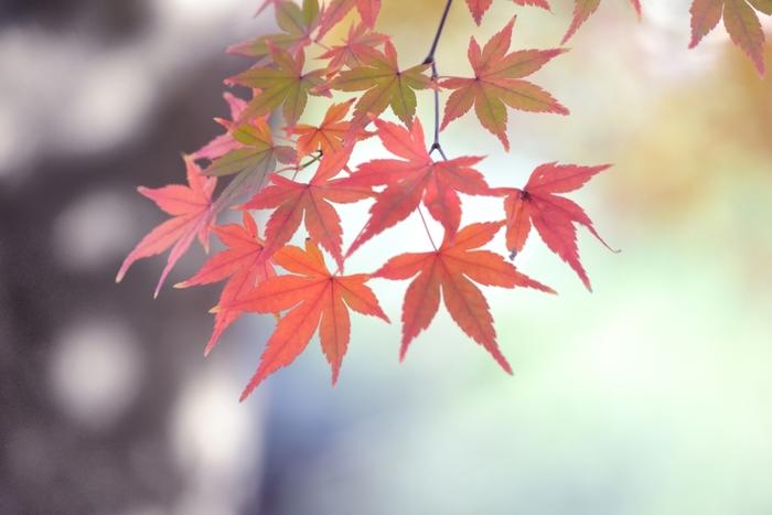 秋の鎌倉をゆっくり楽しむのにおすすめのスポットをご紹介しました。 神社や寺院で静かなひとときを楽しみ、美味しいランチやスイーツを味わって、温泉で癒されて…心身ともにリフレッシュするのにピッタリな場所でもある鎌倉。 是非、この秋は鎌倉へ足を運んでみてはいかがでしょうか?