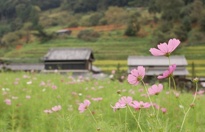 ぜひ、野の花々を愛でながら、飛鳥時代に思いを馳せてみてくださいね。