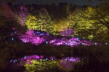 期間中は夜間に紅葉と作品鑑賞が楽しめる限定の催しも人気なんです♪ こちらは、昨年の「ザ・ナイトミュージアム」の様子。 紅葉が色付きはじめる10月20日(金)~11月12日(日)まで、六甲高山植物園と六甲オルゴールミュージアムの営業時間を延長します。 ライトアップされた、夜の植物とアートの融合にはため息がもれるほど。