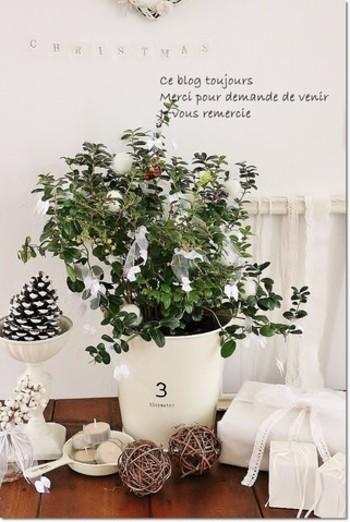 りんごベリーの木をツリー代わりに。白のリボンや、羊毛フェルトを丸めたものを飾り付けてにぎやかに。