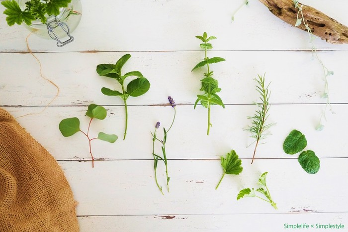 手軽に栽培できて、気軽に楽しめる。「キッチンハーブ」の始めかた