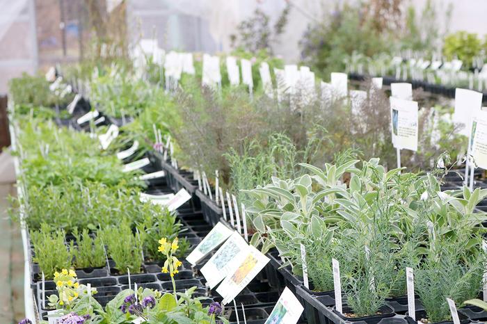 まずは、ホームセンターやガーデニングショップなどでお好きなハーブのポット入り苗を手に入れましょう。