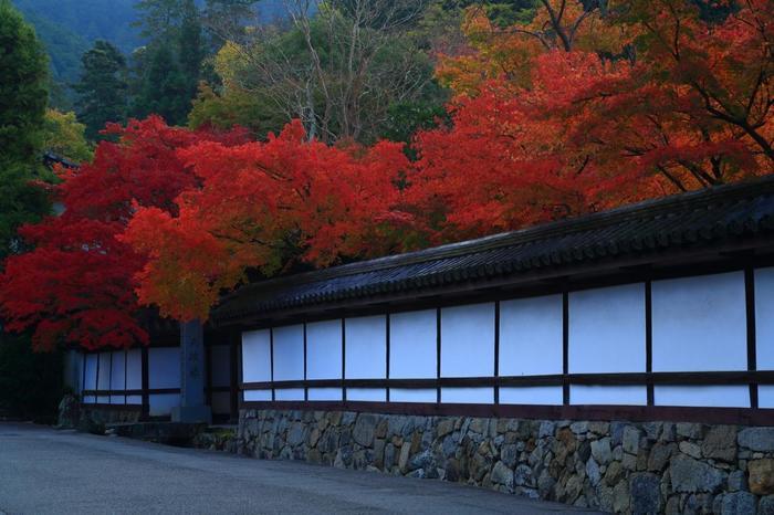 南禅寺の塔頭寺院は、全て常時公開されていませんが、公開している塔頭寺院の中で、特に名高いのは「金地院」と「天授庵」です。両者ともに、素晴らしい庭園を抱く寺院です。  蹴上駅から歩くのなら、南禅寺の三門より近い「金地院」と「天授庵」を先に訪れるのがお勧めです。特に紅葉時の「天授庵」は人気が高く、日中は混雑するので、午前中早目に訪れるのがベストです。 【11月中旬の早朝の「天授庵」。紅葉ピーク時に撮影や静かな鑑賞を望むのなら、開門前に並んだ方が無難です。】