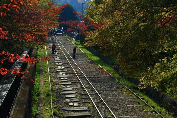 近代遺産に指定された「インクライン」は、高低差のある運河間を、船ごと台車にのせて走らせた傾斜鉄道で、明治から戦後まで台車に乗せられた船が、線路上を行き来していました。蹴上から琵琶湖疏水記念館の袂まで、約547mのレールが今も残り、途上には当時使われていた台車が保存展示されています。  近年は、桜の名所と知られ、最盛期には多くの花見客で賑わいますが、夏の緑も、桜葉が色づく頃もしっとりとした景色が広がります。【11月中旬頃の「インクライン」】