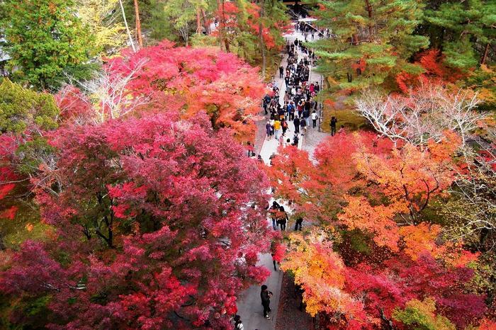 """この三門は、歌舞伎の人気演目「楼門五三桐(さんもんごさんのきり)」の二段目の返しで、天下の大盗賊・石川五右衛門が、三門屋上で廻す科白「絶景かな、絶景かな。」で良く知られています。一度は眼におさめたい必見の""""絶景""""です。 【11月中旬の三門から見下ろした参道の景色。】"""