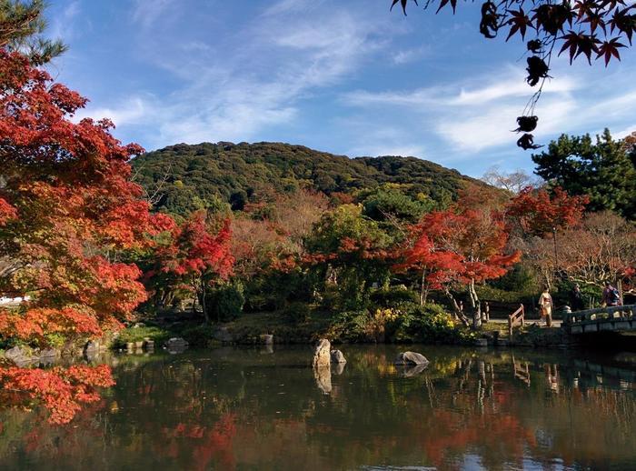 「円山公園」は、東山連峰を背に、八坂神社、知恩院、高台寺に囲まれた、京都市最古の公園です。緑豊かな園内には、池泉回遊式庭園を中心にして、料亭や茶店、野外音楽堂や坂本龍馬の銅像等が点在しています。【11月中旬の円山公園。】