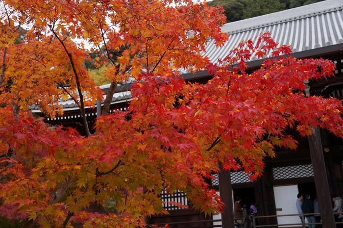 """""""もみじ""""で知られる寺院ですが、「唐門」や「釈迦堂」、「阿弥陀堂」や「臥龍廊」、「多宝塔」といった見所も多く、また本尊である""""みかえり阿弥陀""""や、長谷川等伯の襖絵など数多くの寺宝を抱え、紅葉以外でも訪れる価値のある寺院です。 【11月下旬の永観堂境内。】"""