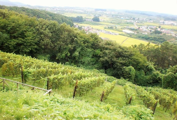 シャルドネ、カベルネフラン、リースリング、メルロー、ピノノワール。多彩なワインぶどうが栽培されています。フランスブルゴーニュのコンクールChardonnay du mondeに選定されるなど、国内外のワインコンクールでの受賞も増えています。