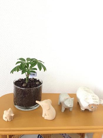 カポックは育てやすく初心者におすすめの観葉植物です。丸みのある楕円形の葉が、手のひらを広げたような形に広がり、見た目も可愛い!葉に丸みと厚みのあるホンコンカポック、小型のコンパクタ、葉が浅く割けたレナータなどがあります。他の植物とくらべて寒さに強く、成長も早くて丈夫な植物です。
