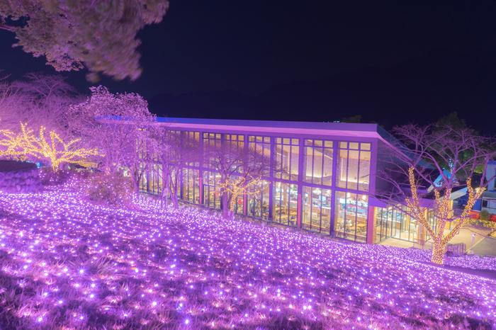 約600万ものLED電球が一斉に煌めく壮大なイルミネーションは、関東最大級の規模で、圧倒的なスケールを誇ります。都心から少し足を延ばして、水と光が織りなす光の祭典の見に行きませんか。