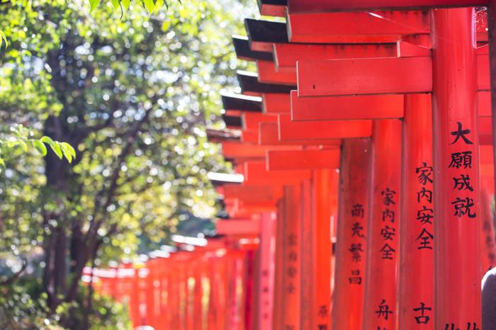 鳥居がずらりと並ぶ参道は、フォトスポットとしても人気です!鮮やかな朱色がとても綺麗です。