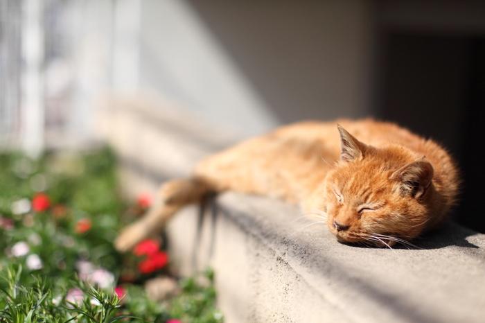 夕焼けの美しさはもちろんのこと、のんびりとした猫が多いことでも人気のスポットです。可愛い表情をカメラでパシャりと収めましょう♪