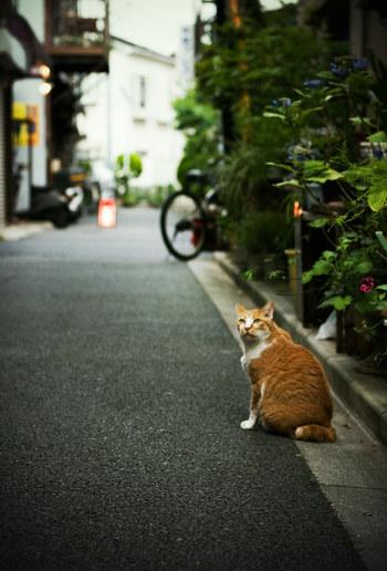 休日にのんびりと、谷根千さんぽはいかがでしょうか?下町ならではの温かい雰囲気を楽しんでくださいね*