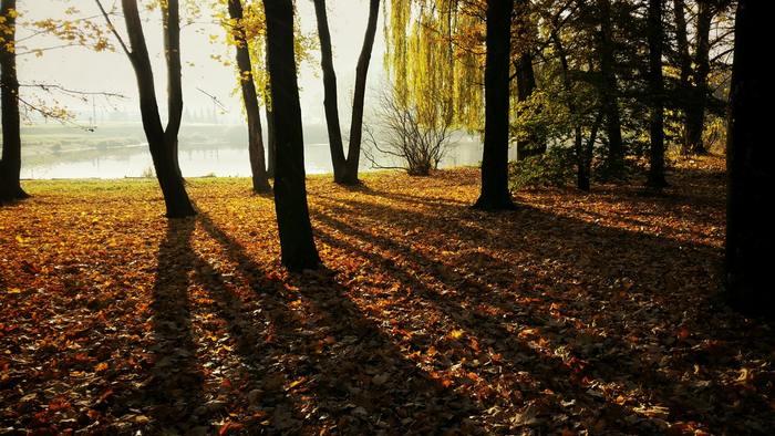 紅葉や季節の花々など、秋は写真に収めたくなる美しいものがたくさんあります。カメラを片手にお散歩に出かける方も多いのではないでしょうか。