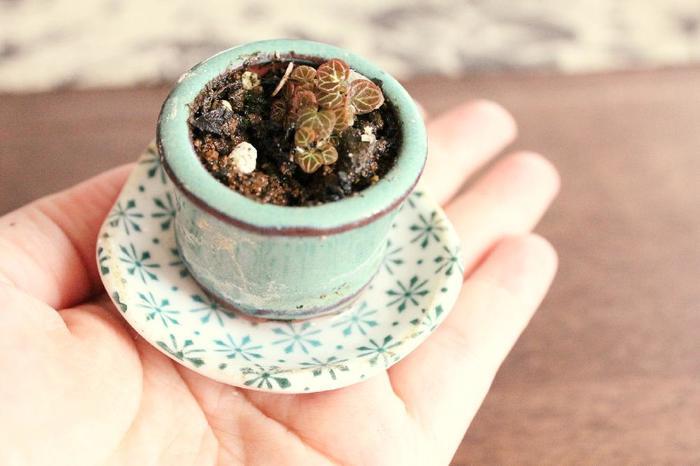 盆栽を大きさで分けたとき、その呼び方はまだ統一されていないようです。  高さ10cm程度までの、手のひらにのるような盆栽を形容する言葉として、「まめ盆栽」「ミニ盆栽」という呼び名があります。その定義は諸説あり、両者が同じように扱われている場合や、まとめて小品盆栽とする場合もあるようです。  基本的には、 ・まめ盆栽 ・ミニ盆栽 ・小品盆栽 ・貴風盆栽 ・中品盆栽 ・大品盆栽 の順に樹形が大きくなると考えてOKです。