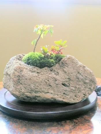 石を盆栽の植え付けに用いた盆栽を「石付き」と呼びます。自然の風合いを映す岩肌は盆栽に自然の豊かさを感じさせてくれます。