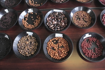 いかがでしたか?よく食卓に登場する大豆から、お正月になると食べたくなる黒豆、お汁粉や和のスイーツに欠かせないあずきなどの他にも、うずら豆、白いんげん、とら豆など、あまりなじみのないお豆レシピまで。気に入ったレシピやお豆があれば、試してみてください。これまで知らなかったお豆の新たな魅力にはまってしまうかも。