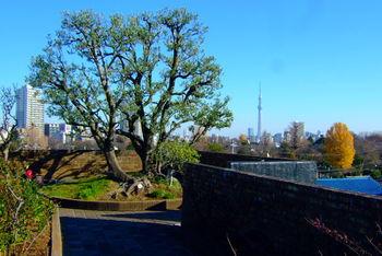 建物の屋上にある庭園は、日本の屋上緑化の先駆けです。四季咲きのバラなど季節を通して楽しめますし、スカイツリーが見えるのも嬉しいですね。入口で見えた屋根の上の人影にも、ここで会えるようです。 ワークショップなど、ものづくりの楽しさを体感するイベントも定期的に開催されています。