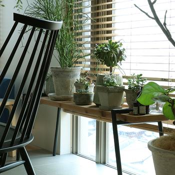 暖かい季節は庭やベランダで育てていた植物も、寒さに弱いものは本格的な寒さが始まる前にお部屋の中に避難させましょう。
