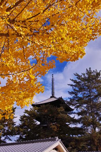 興福寺の境内にも大きくて立派な銀杏の木があります。また興福寺の紅葉は、五重塔から階段を下りたところにある猿沢池越しに見るのもオススメ。興福寺境内を囲む木々が水面に映り込み、風のない日は特に綺麗です。