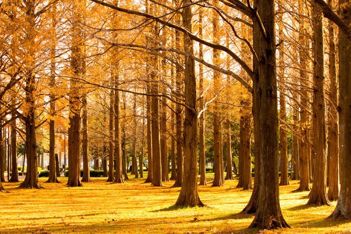 ポプラ並木やメタセイコアの森、ハンノキなどきれいな木々の姿が見られます。雰囲気たっぷりで、秋には紅葉が楽しめます。光を受けた木々や水辺はとってもきれいで癒されます。