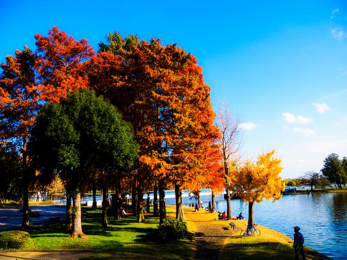 葛飾区にある「水元公園」は、都内唯一の水郷の景色が見られる公園です。大小の水路が園内に流れ、きれいな風景を作り出しています。たくさんの木々に囲まれ、水辺の植物もたくさん見られ、のどかな風景が広がっています。