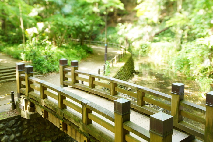 都内唯一の渓谷がある「等々力渓谷公園」は、東京都指定名勝に指定されています。東京都は思えない自然豊かな風景が広がる観光名所です。木漏れ日が差し込む木々の中を、ゆっくり散歩していると気持ちがリフレッシュしてきます。