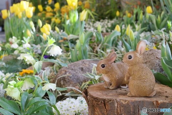 チューリップやヒヤシンスなどの春に咲く球根とともに植えると、一斉に蕾がふくらみ、とても賑やかなお庭に。毎年春の訪れが待ち遠しくなりますよ♪夏に葉を茂らせるクリスマスローズと、そのころに地上部を枯らす春咲き球根はとても相性が良くおすすめです。