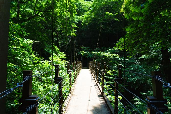 東京・八王子にある標高599mの山、「高尾山」。6つの自然研究路をはじめ、いくつもの登山コースがあり、ケーブルカーやリフトを利用して気軽に登れる登山コースもあります。緑いっぱいの風景が広がって、秋には紅葉が楽しめます。